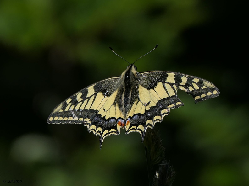 Gazé et Machaon 20200725174954-cdcceb94-me