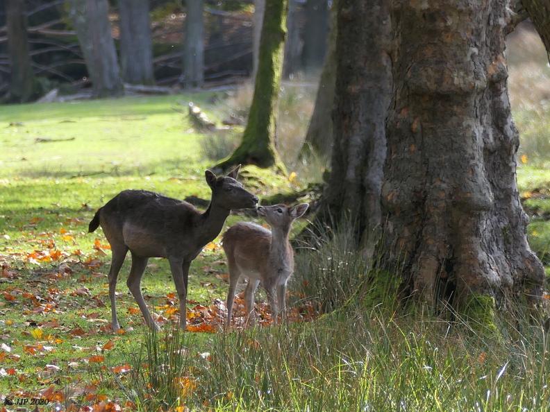 Bambi 20201029202805-e991b80c-me