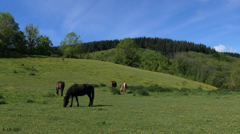 Les chevaux 20210524164852-33e62ae3-me