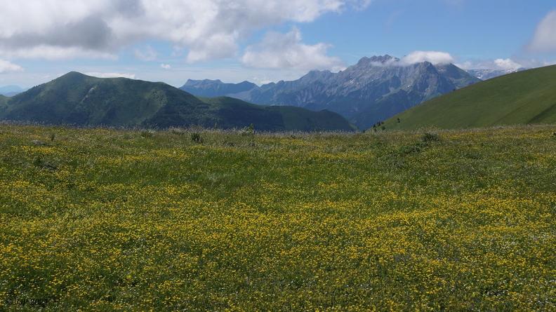 Prairie en altitude 20210702174226-16f0f4df-me
